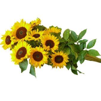 spedizione fiori roma spedizione fiori roma fiori a domicilio roma le
