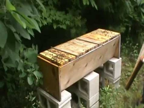 harvesting honey from a top bar hive harvesting honey from our cedar top bar bee hive from www cedarchickencoop com