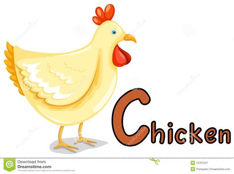 Letter Chicken Animal Alphabet C For Chicken Royalty Free Stock Photography Image 13791547