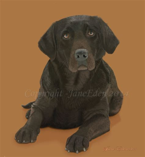 Labrador Retriever Artwork by Chocolate Labrador Retriever By Janeeden On Deviantart