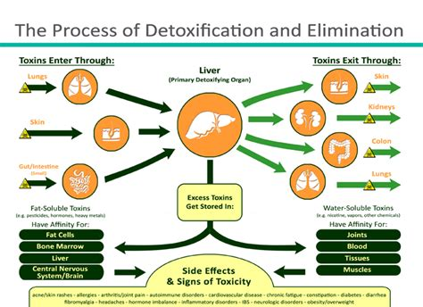 Tanning And Detox by Cleaning A Guide To Detoxification San