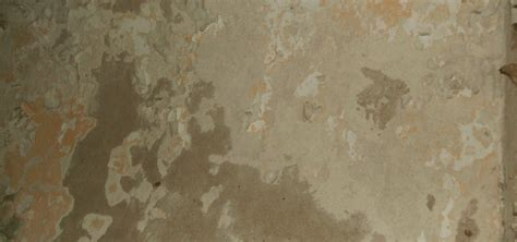 how to paint plaster walls like a pro