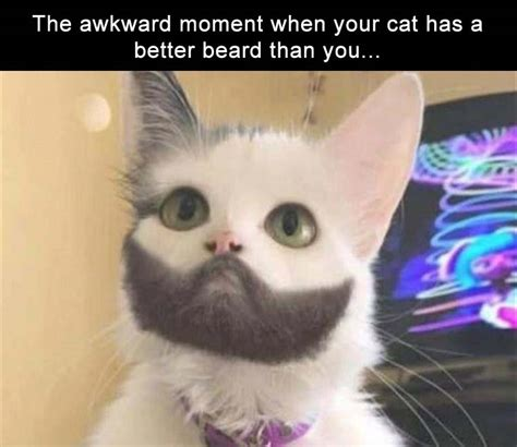 Awkward Cat Meme - 34 funny memes and pictures of the day funny pictures