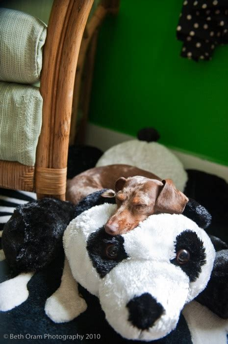 panda bed panda dog play bed thingy am so getting that when i move