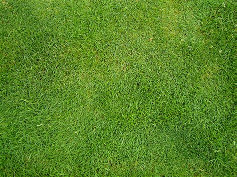 pattern photoshop grass making grass pattern textures patterns