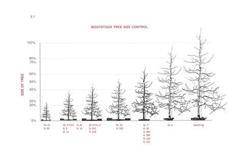 fruit tree spacing chart varieties and pollination bc tree fruit production guide