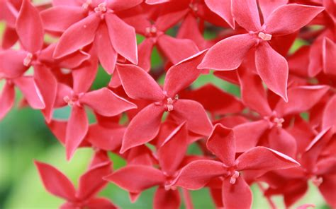 small flower plants small red flowers wallpaper