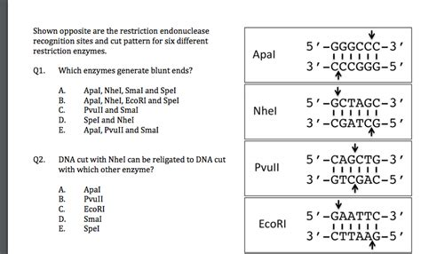 pattern recognition questions and answers solved shown opposite are the restriction endonuclease re