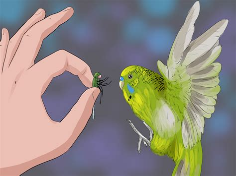 how to my to outside how to teach a budgie to catch flies 5 steps with pictures