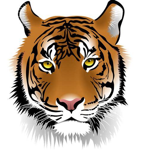 gambar harimau format png gambar vektor gratis harimau harimau sumatera gambar