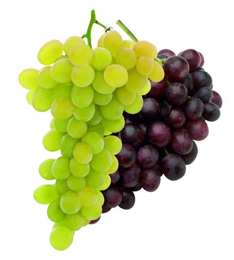Table Grapes by Table Grapes Alegra
