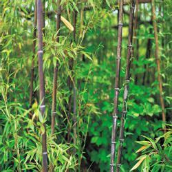 how to get rid of bamboo from your yard apps directories