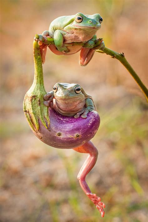 frogs  humans share   basic organs