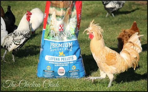 how chicken tractors can increase egg production and get 24798 best pinning with my peeps the chicken chick