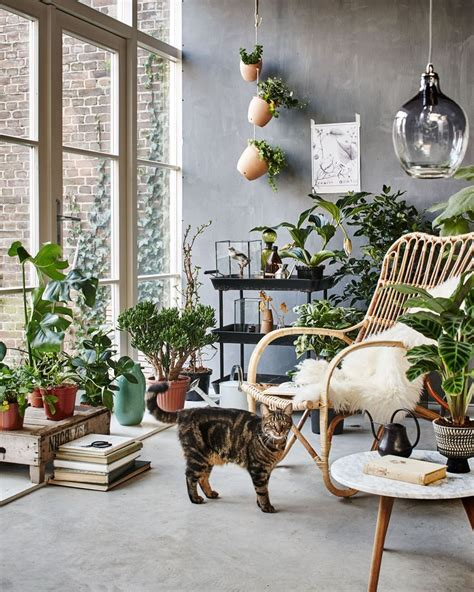 best living room plants 25 best ideas about rattan chairs on pinterest rattan