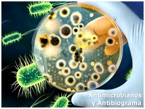template ppt bacteria free antimicrobianos y antibiograma