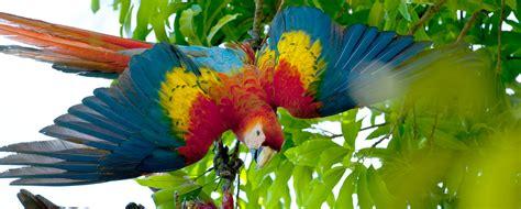 les 20 meilleures id 233 es de la cat 233 gorie ombrage de sourcils sur formes de sourcils oiseaux polaires observer les oiseaux exotiques et des r 233 gions polaires un