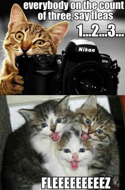 Silly Cat Memes - on the count of three funny cat meme