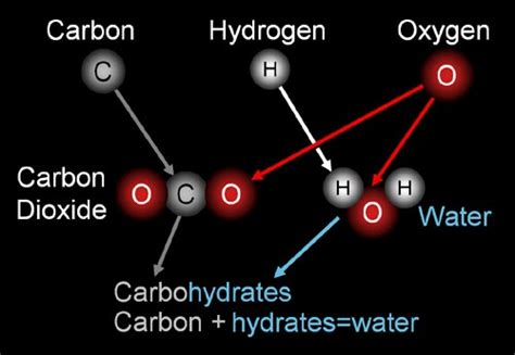 9 carbohydrates are composed of which three elements sci9bestq3bm carbohydrate