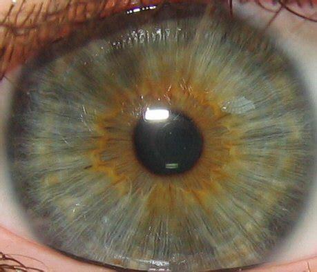 what color is iris 205 ris wikip 233 dia a enciclop 233 dia livre