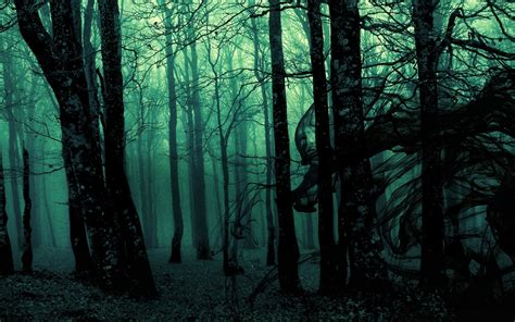 wallpaper abyss forest forest full hd wallpaper and background image 1920x1200