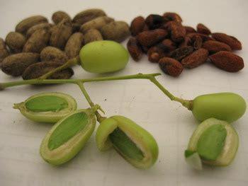 Pestisida Neem mimba azadirachta indica a juss brigade proteksi