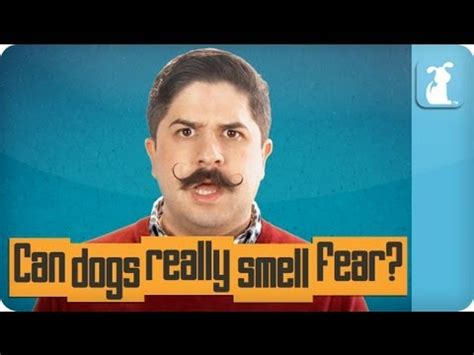 can dogs smell fear your pet is you sick pet lab funnydog tv