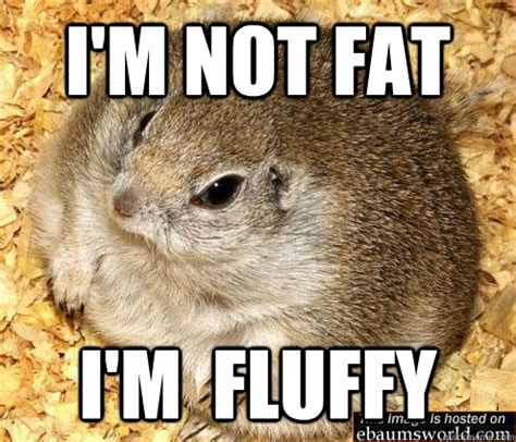 I M Fat Meme - 40 very funny hamster meme images and pictures