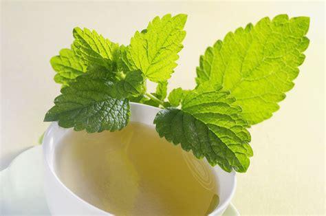 5 lemon scented herbs for a garden