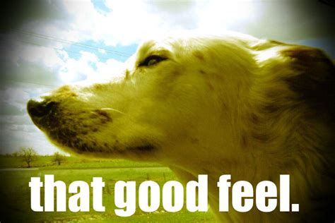 Feel Good Meme - image 192010 feels good man know your meme