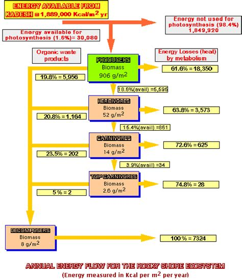 food web flowchart laga s water ecology estimates of the energy in