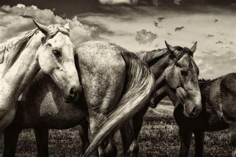 imagenes de unicornios en negro fotos de animales en blanco y negro taringa