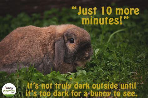 Rabbit Memes