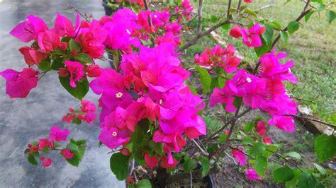 cara membuat bunga kertas bonsai file bunga kertas 14 jpg
