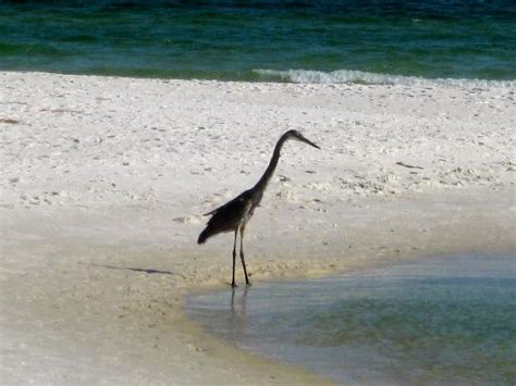 perdido key picture of gulf islands national seashore