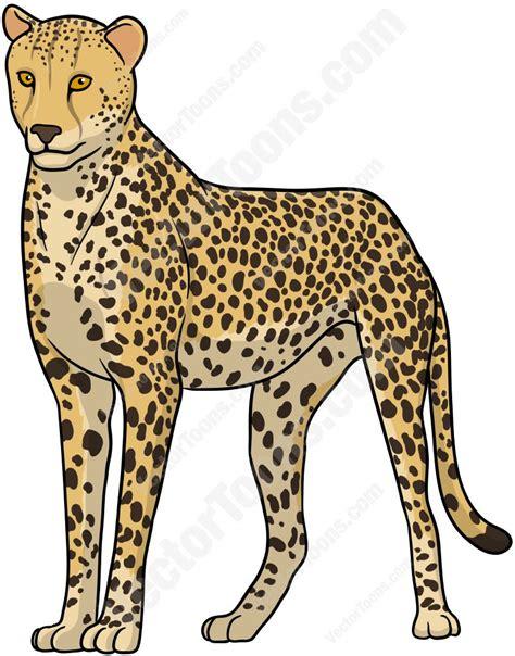 cheetah clipart standing cheetah vector clip