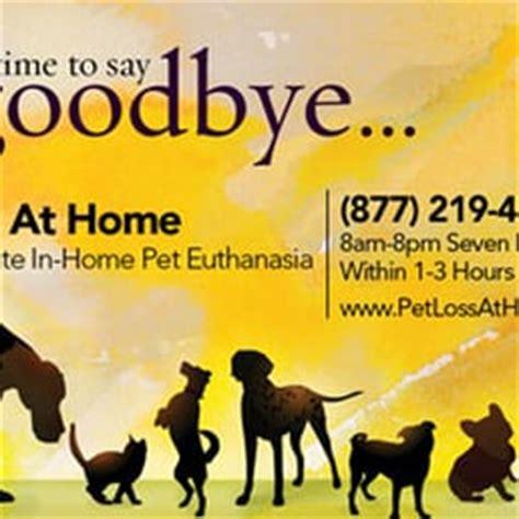 pet loss at home home euthanasia vets veterinarians