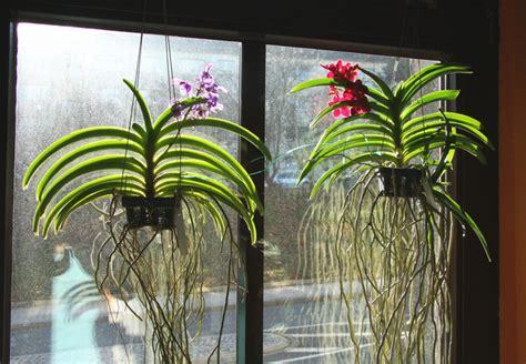 entretien des plantes 233 piphytes orchid 233 es tillandsias brom 233 liac 233 es