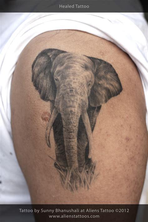 elephant tattoo genital elephant tattoo on behance