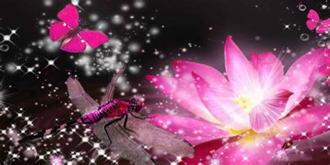 imagenes mariposas para facebook mariposa rosada portada para twitter portadas twitter
