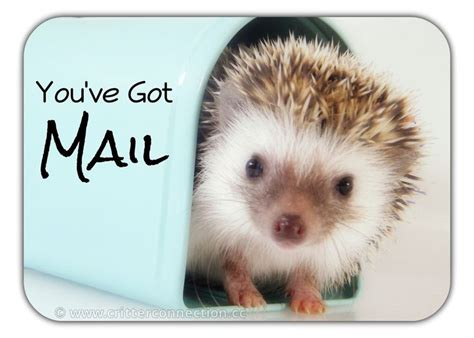 Hedgehog Meme - 1000 images about hedgehog memes funnies quotes and