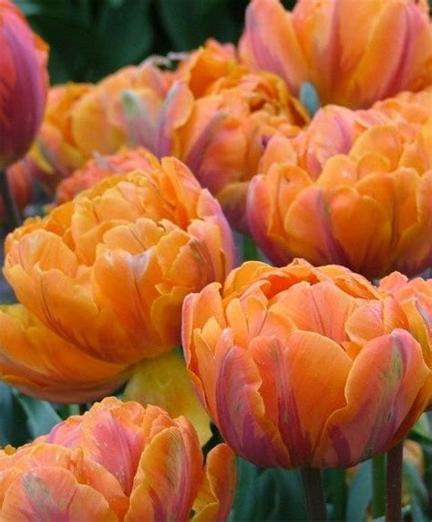 pretty orange 194 best beautiful orange color images on pinterest