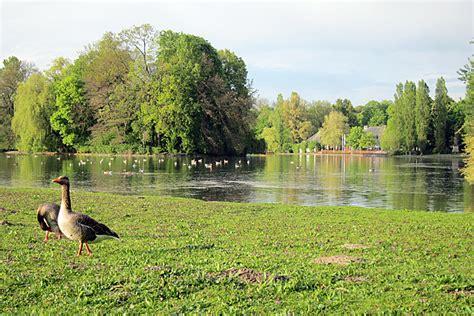 Englischer Garten München Kleinhesseloher See by Englischer Garten In M 252 Nchen Birding Mit Waltraud Hofbauer