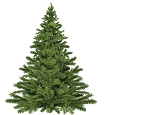recycle real or artificial trees in norfolk 2016