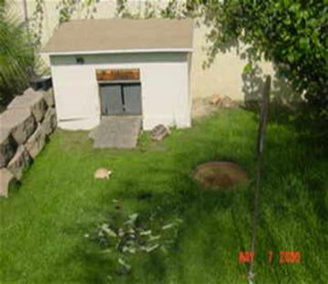 sulcata tortoise house sulcata tortoise housing