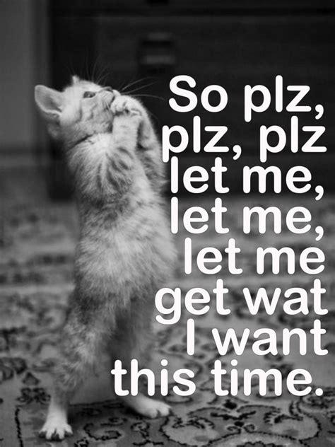 Miserable Cat Meme - 51 best other people s morrissey memes images on pinterest