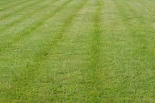 black and white grass