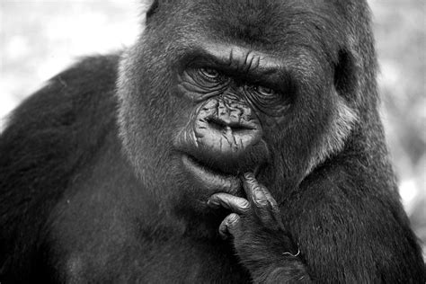 lass mich einfach hier liegen la 223 mich 252 berlegen foto bild tiere zoo wildpark