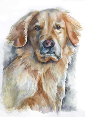 sally s golden retrievers 17 best images about on watercolors airedale terrier and tibetan