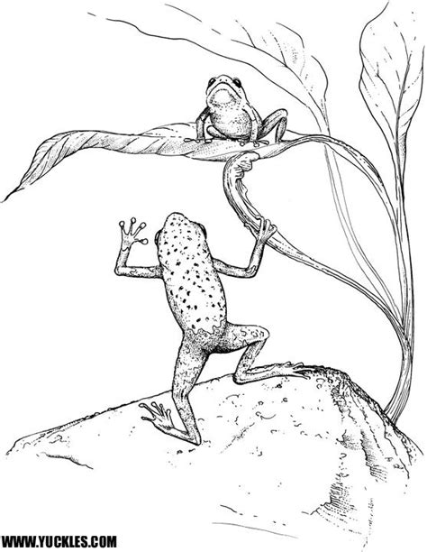 coloring pages of tree frogs free coloring pages of tree of life